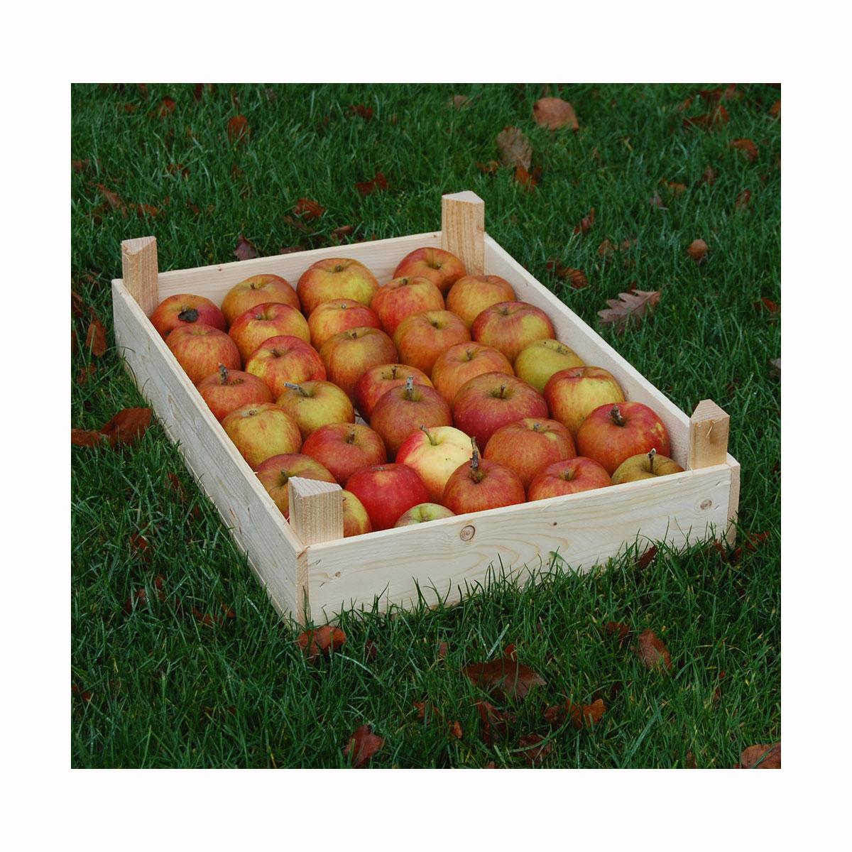 Æblekasse - letvægt